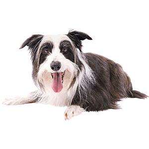 Resa med hund och pass